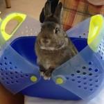Attività di Pet Therapy
